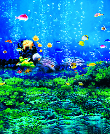 underwater photography backdrops high clear fish and water photo