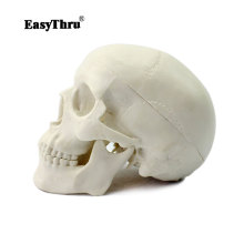 Купить с кэшбэком EasyThru human Head Skeleton Skull Model Medical Science Teaching Human Anatomy Precise brain Medical Model traumatic pistol
