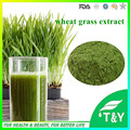 Natural orgânico da grama do trigo em pó