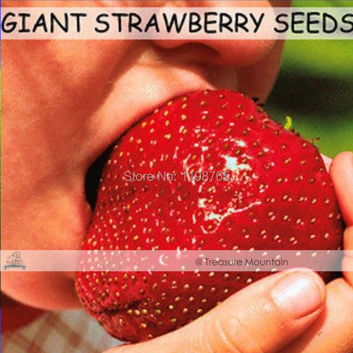 500 Seeds / Pack, Super Giant Strawberry Fruit Seed Apple Sized
