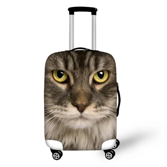 Download 80+  Gambar Kucing Hantu Imut HD