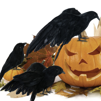 3Pcs Realistic Black Ravens Crow Prop Feathered Crows Halloween Prop Decor Party Magic Decoration