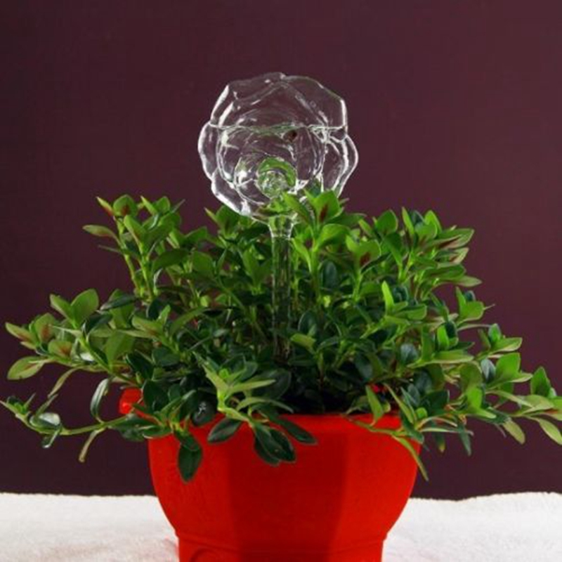6 Types Glass Plant Flowers Water Feeder Automatic Self Watering Devices Bird Star Heart Design Plant 6 Types Glass Plant Flowers Water Feeder Automatic Self Watering Devices Bird Star Heart Design Plant Waterer