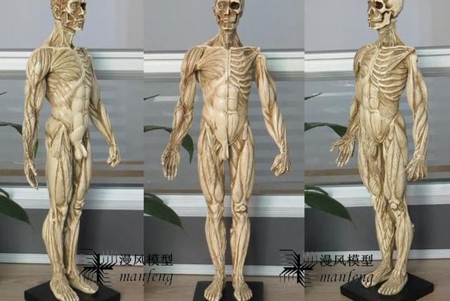 Aliexpress.com: Comprar Modelo del cuerpo humano pintura con resina ...