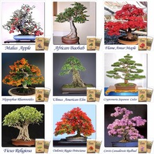 Mix of 15 Different Bonsai Seeds 85pcs total