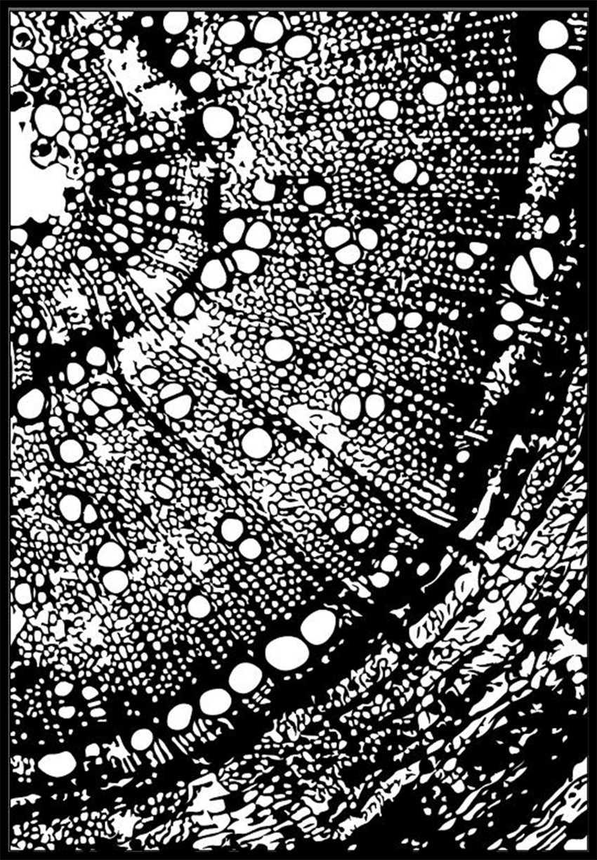 Panfelou 11*16 Mikrokosmos Dunia Transparan Bening Silikon Cap/Seal Diy Scrapbooking/Photo Album Dekoratif Bening Perangko lembar