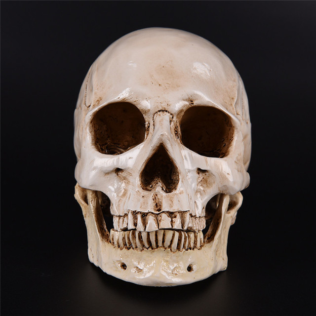 Resin Replica Medical Model Lifesize 1:1 Halloween Home Decoration High Quality Decorative Craft Skull 2
