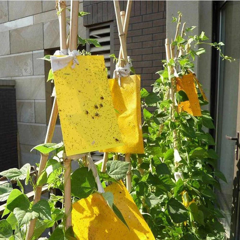20 pièces pièges à mouches fortes insectes collant conseil attraper les insectes pucerons tueur de ravageurs piège à mouches en plein air pour pucerons champignon GnatsLeaf