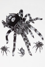 Big Black Spider Tattoo 21 X 15 CM Sized Sexy Cool Beauty Tattoo Waterproof Hot Temporary Tattoo Stickers