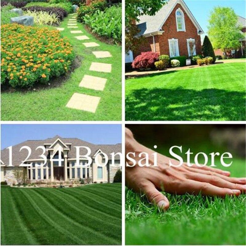 1000 Pcs Green Turf Grass golf,special Perennial Lawn Plant,soccer Fields Villa,high-grade Flowers Bonsai Garden Grass Plant