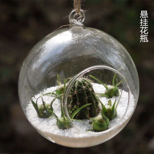 Set Of 6 Hanging Glass Orb Planter Vases Globe Terrarium Kit For