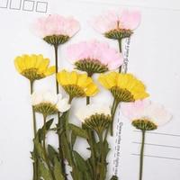 Chryzantema/Daisy Suszone Kolorowe Kwiaty Handmade Rzemiosło Dla Uroczysty/Strona Dekoracji 100 Sztuk