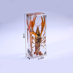 Image 2 - Brand New lobster specimen In clear Lucite Educational Explore Instrument 11x4.5x2.8cm