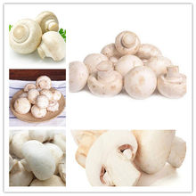 Big Sale 200 Pcs Delicious White Mushroom bonsai Green Vegetables Bonsai plant Very Easy To Grow For Home(China)