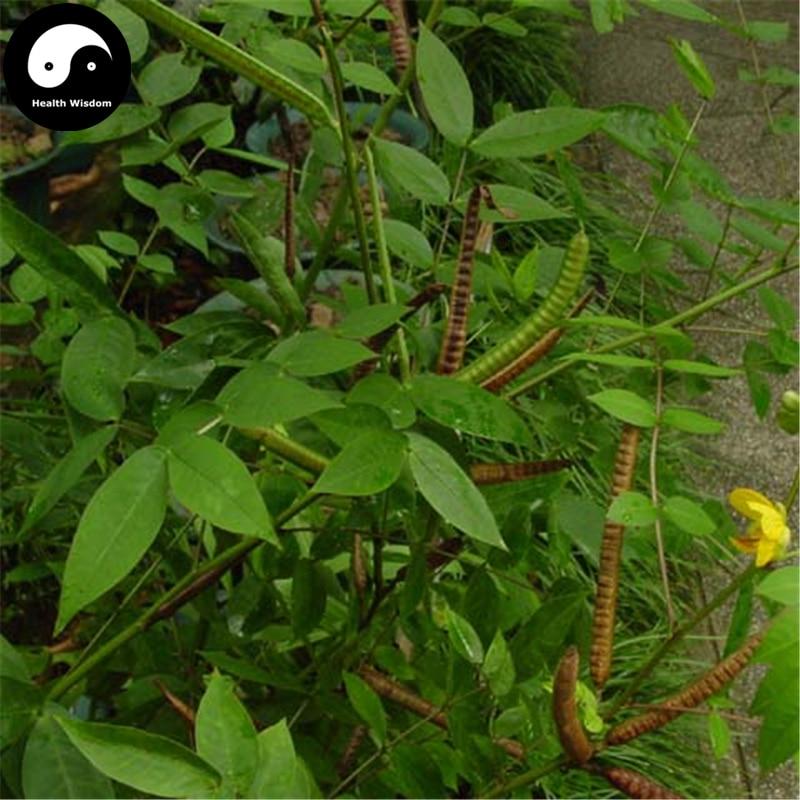 buy-cassia-occidentalis-semente-400pcs-plant-herba-coffee-font-b-senna-b-font-for-wang-jiang-nan
