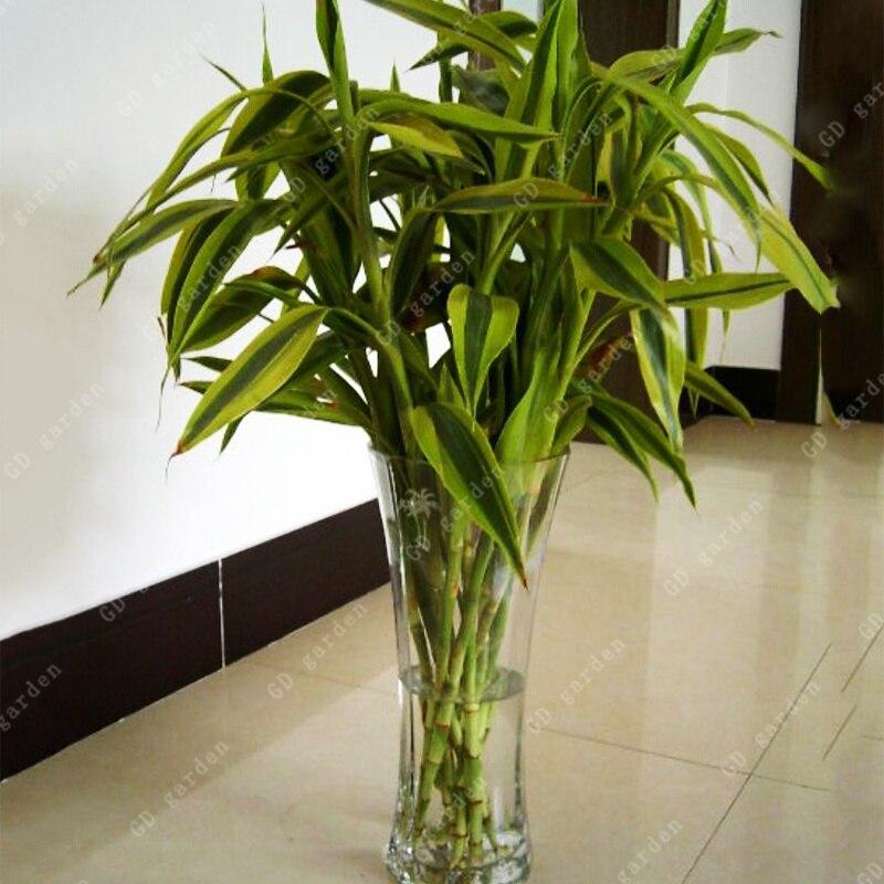 Confronta i prezzi su Indoor Bonsai Trees for Sale - Shopping Online / Acquis...