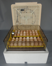 Best selling Digital Automatic Egg incubator 96 chicken egg hatching machine Turning chicken gooose quail duck poultry
