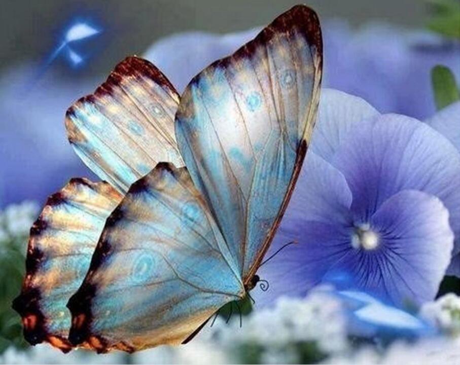 diy diamant pictura fluturi, broderie cristal, animale, piatra de - Arte, meșteșuguri și cusut
