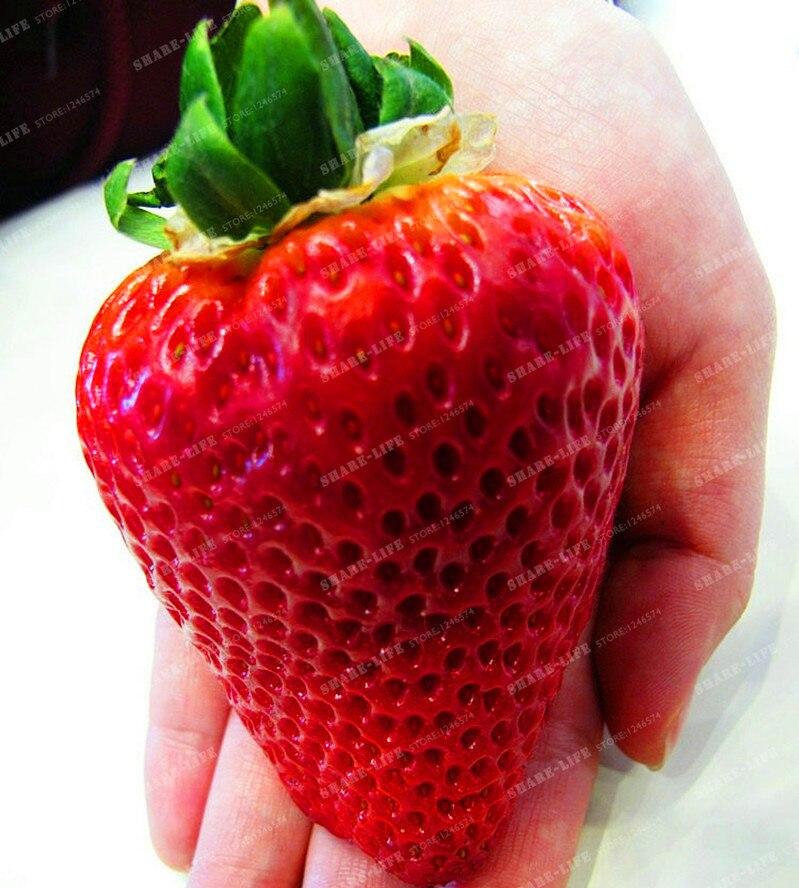 ягодки купить на алиэкспресс