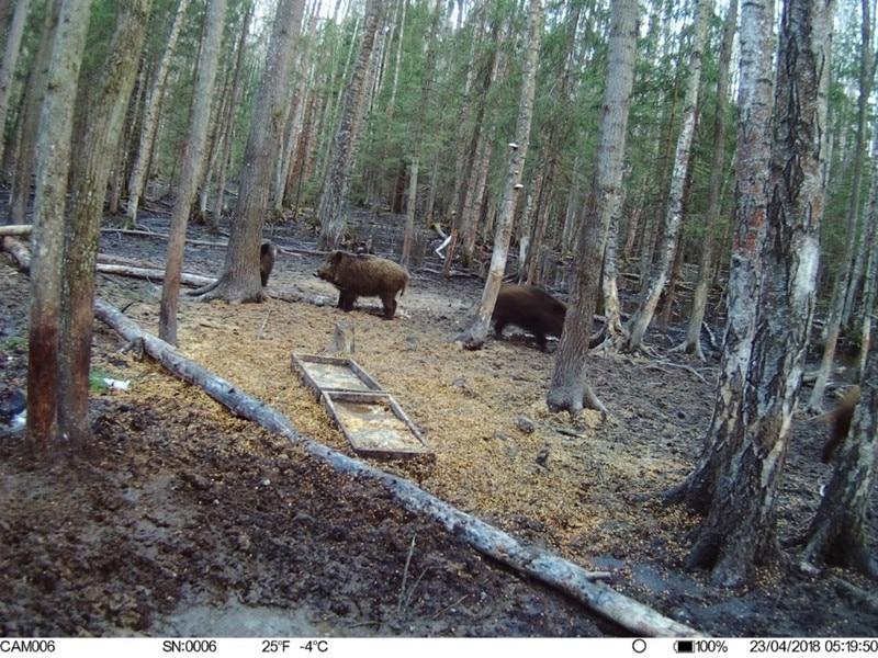 Newest GPS Hunting Camera Digital Video Camera Photo-Traps 4G FDD-LTE Hunting Trail Camera Trap Wild Camera Hunter Foto Chasse wildcamera (2)