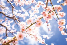 Laeacco Spring Flowers Branches Scenic Photography Backgrounds Customized  Digital Photographic Backdrops For Photo Studio