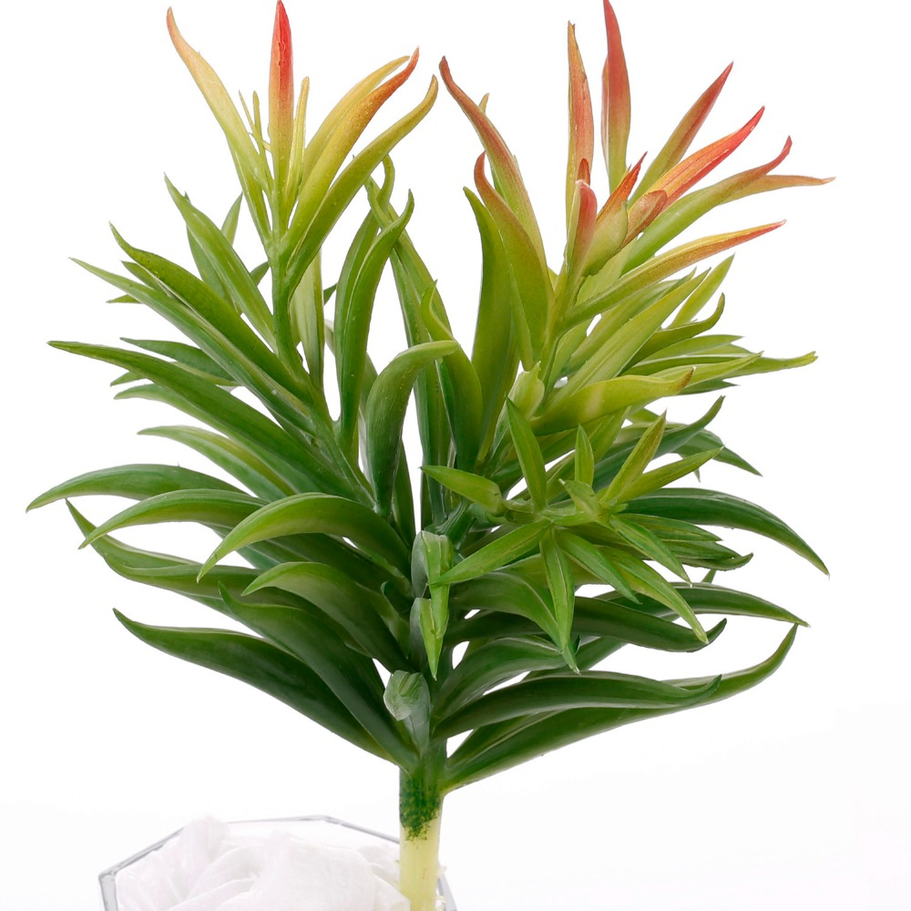 Artificial Dianthus Green Plants Artificial Succulents Fake Plastic