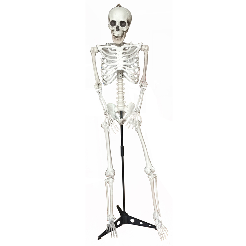 Life Size Skeleton on Stand 100% Plastic Life Size