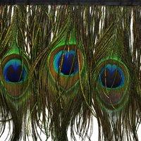 Новинка 2017 года 1 м натуральные перья павлина планки около 15 см ширина бахрома с атласной лентой Вышивание ремесла украшения костюмов