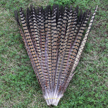 100 PCS high quality Natural color pheasant tail feathers 20-22 inches / 50 to 55 cm