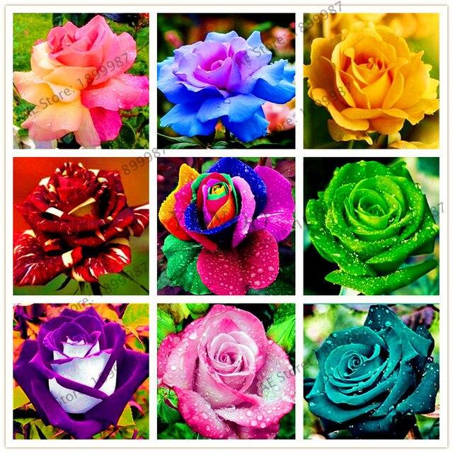 200 шт. редкая Голландия Радуга Роза цветок бонсай для домашнего сада Редкие цветок завод 24 цвета Радуга Роза Флорес