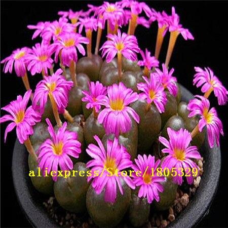 100/bag Mix Succulent seeds lotus Lithops Pseudotruncatella Bonsai plants Seeds for home & Courtyard Garden Flower pots planters