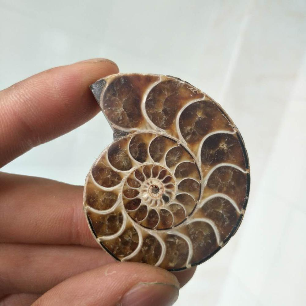 10-15g Pure AMMONITE PRETTY NAUTILUS MADAGASCAR FOSSIL Ore Energy Stone Raw Mineral Specimens