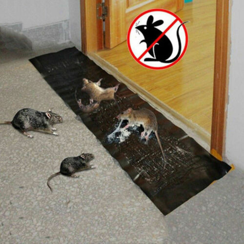Big Large Size Super Sticky Rat Mice Mouse Rodent Snake Bugs Glue Traps Board Mat Non-Poison