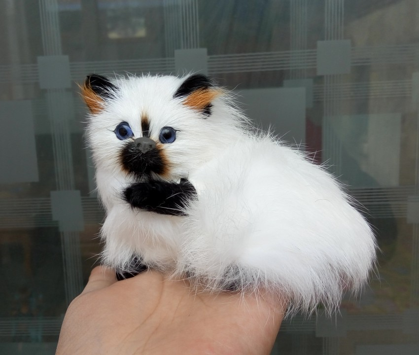 simulation cat about 11x9cm toy lifelike Persian cat model, home decoration gift t087 simulation cat white lifelike cat home decoration gift 32x15x20cm
