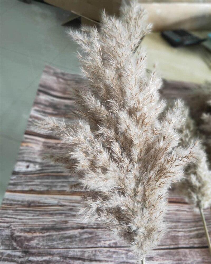 15PCS Natural Dried Small Pampas Grass Phragmites For Banquet Wedding Decoration