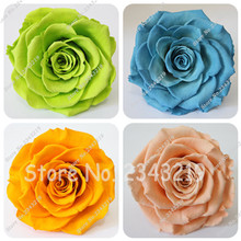 Crazy Promotion Exotic Seeds Rainbow Rose Seeds DIY Home Garden Colorful Rose Flower Plant  50 seeds