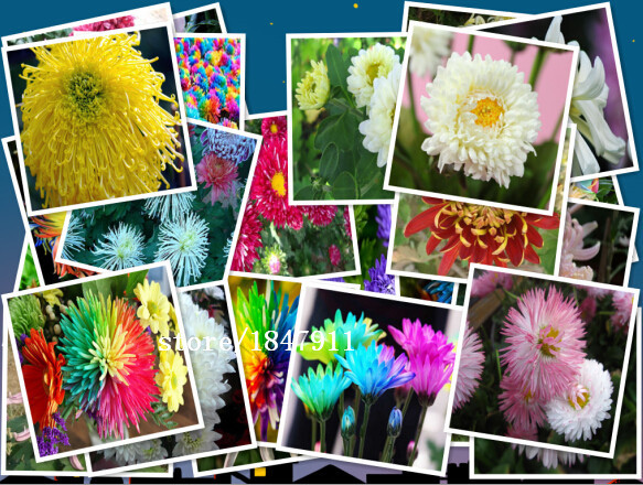 Online Buy Wholesale planting wildflowers from China planting – Planting a Wildflower Garden