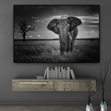 Wall Art Wild Animals African Elephant Canvas Painting Black and White Posters Prints Picture Living Room Cuadros Decor