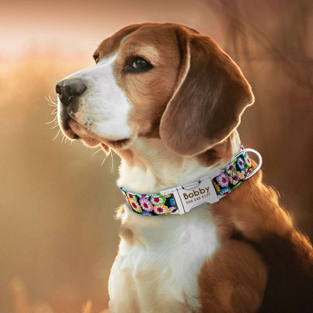 HTB1E6P2XELrK1Rjy1zbq6AenFXaz - Halsband hond met naam en telefoonnummer nylon 6 patronen