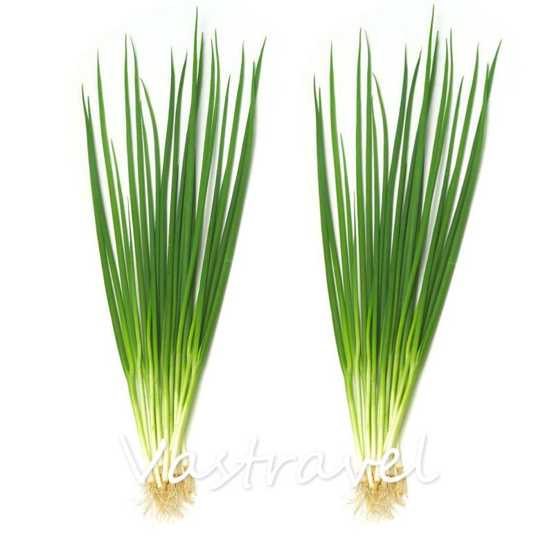primavera chino cebolla vegetales de cocina popular variedad fcil de cultivar a