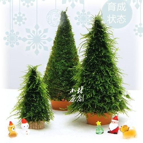Christmas Tree Moss Aquarium: 2pcs Hand Made High Simulation Moss Christmas Tree Plant