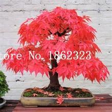 Sale! 30 Pcs Maple Tree Bonsai Blue Japanese Plants Home Garden Balcony Easy To Grow