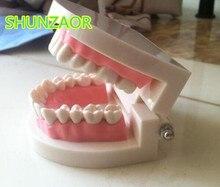 Хорошее Стандартный учение зуб гигантский Стоматолог зубы ребенка kidtraining модель извлечения Спецодежда медицинская образование образовательная модель