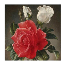 China Rose Diy Diamond painting flower Full Diamond embroidery Red Roses 5d square diamond mosaic Picture White roses рюкзак red roses img564 2015 pu
