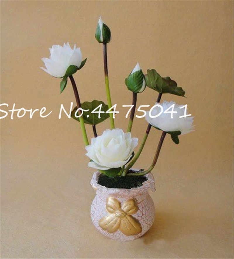 Detail Feedback Questions About Bonsai 5 Pcs Bowl Lotus Flower