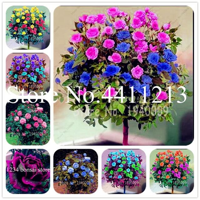 Bonsai 200 pz Rare rosa fiore insieme bella bonsai di rosa albero e Arrampicata