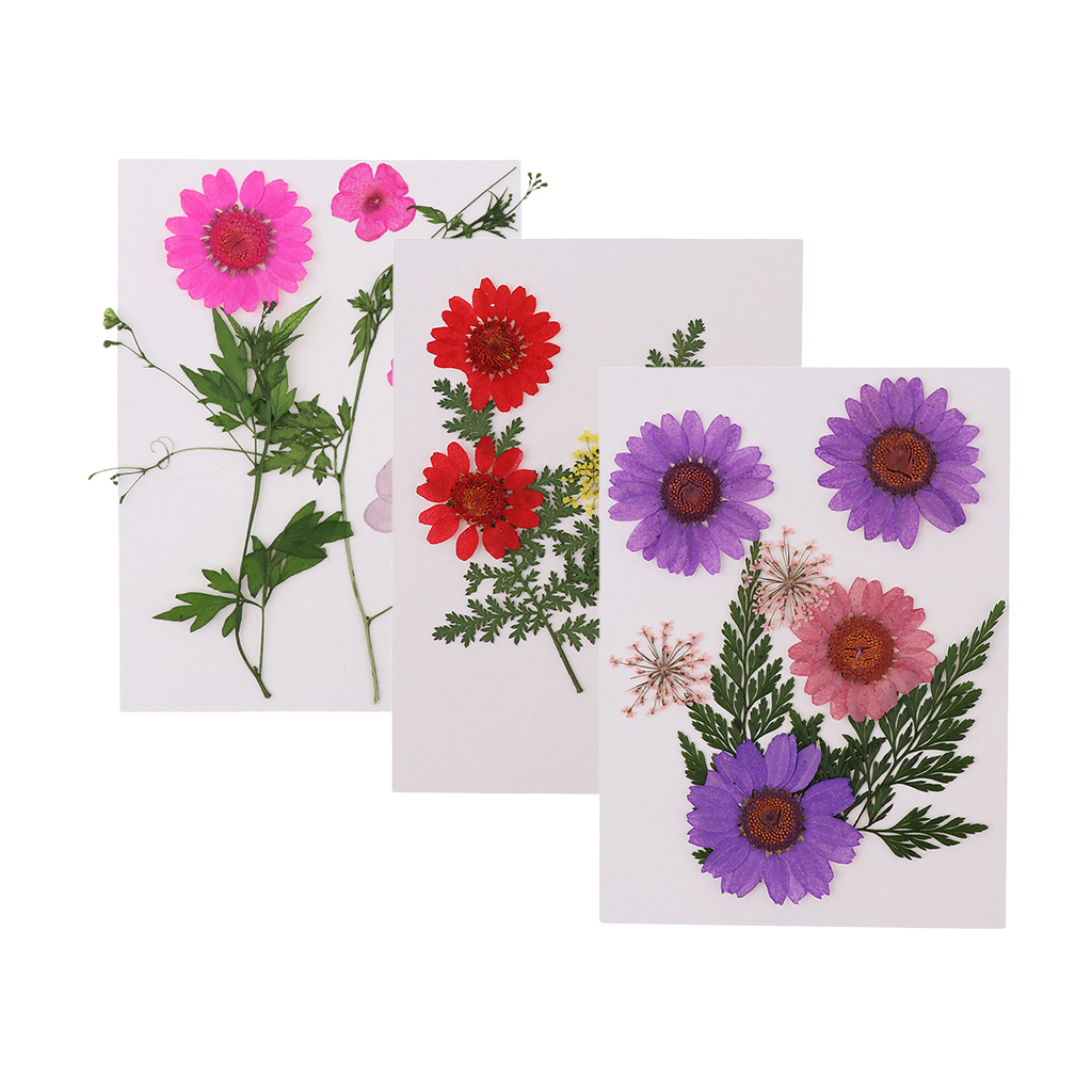 Natural Pressed Dried Flowers for Resin Molding Decors Jewelry Making Phone Case Decoration DIY Scarpbooking Supplies in Artificial Dried Flowers from Home Garden