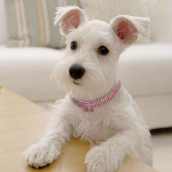 Dog Hot Fashion Necklace 2