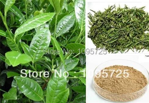 100% Натуральный экстракт зеленого чая порошок 50% полифенолов