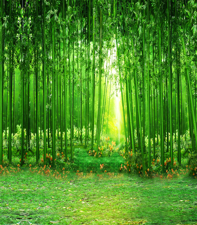 10x10ft Solid Green Bamboo Grove Forest Sunshine Spring